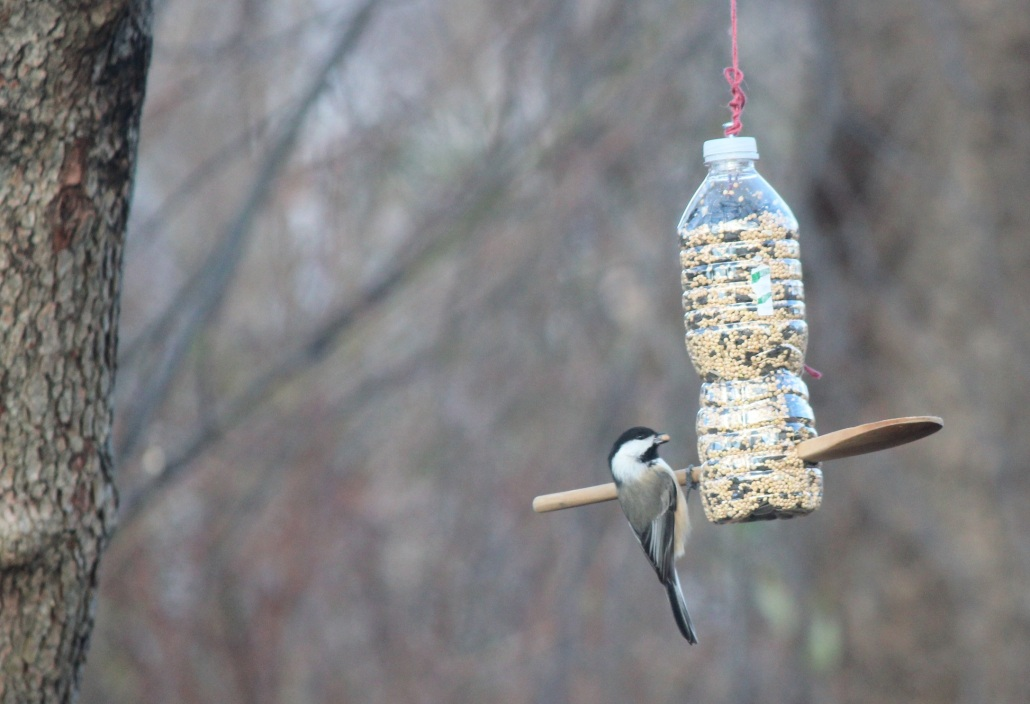 Eating the bird seed