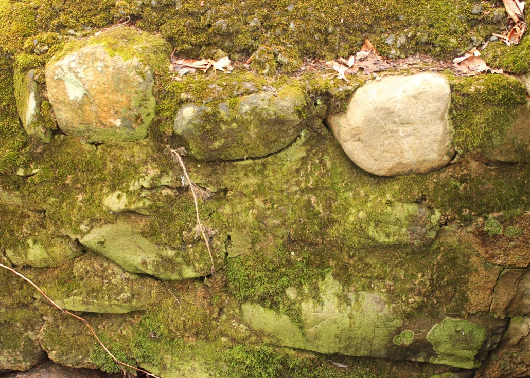 A very green rock wall next to the fairy stream