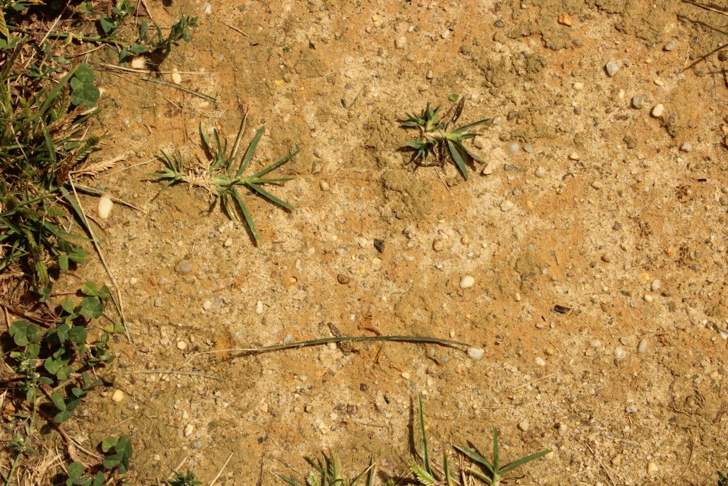Face - grass