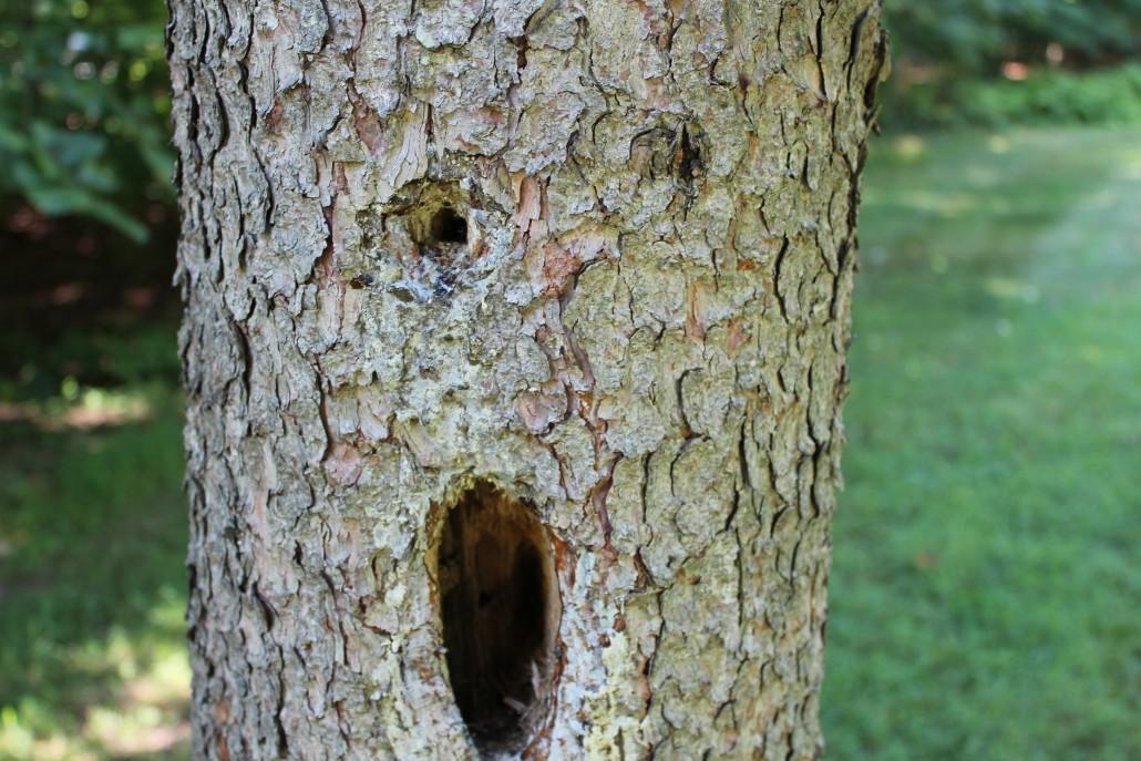 Face - tree