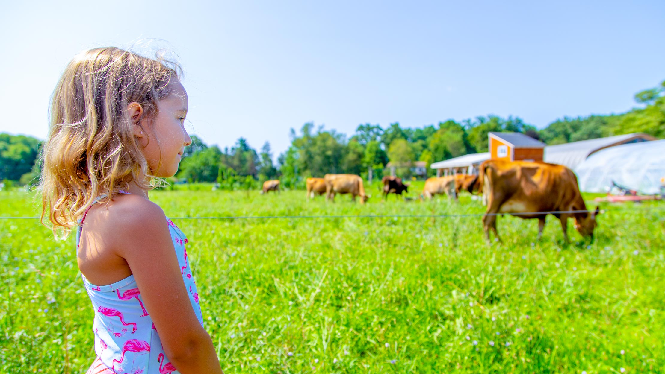 Young camper looking at field of cows