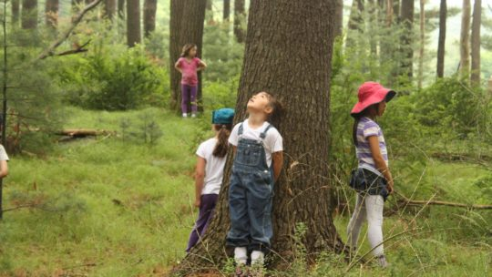 Campers looking up at trees in the forest