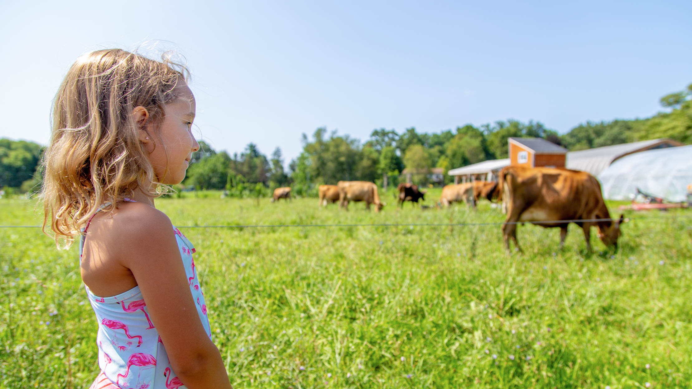 Camper looking at a field of cows