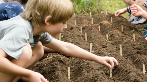 Camper sticking a popsicle stick in the garden to label the crop.